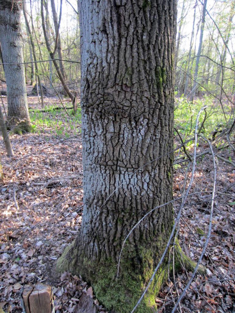 Kaum zu erkennen - hier gab es einen Grenzzaun im Grünauer Forst
